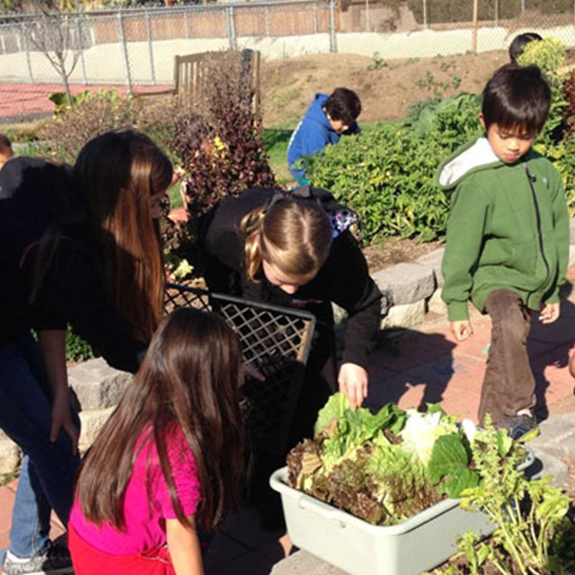 Students picking their rewards after a long while of hard work in the garden.